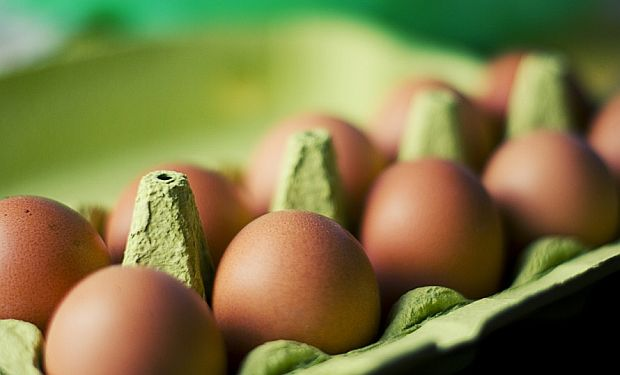 eggs_norm_hol